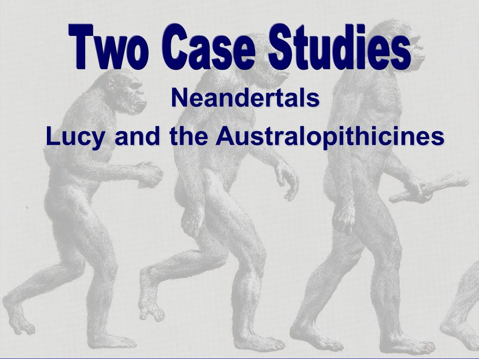 Lucy and the Australopithicines