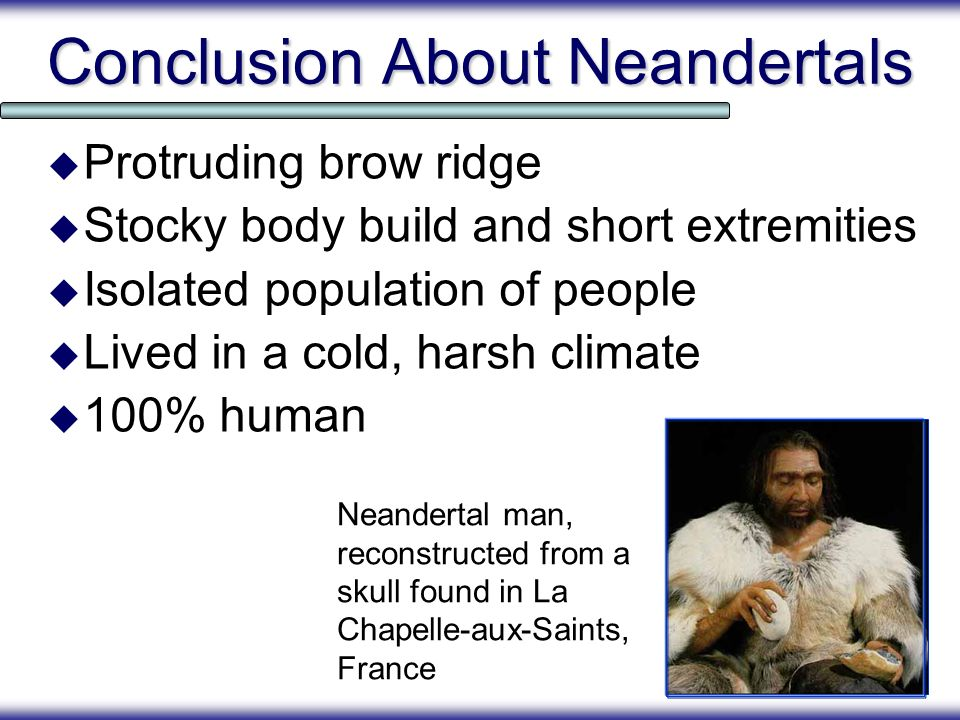 Conclusion About Neandertals