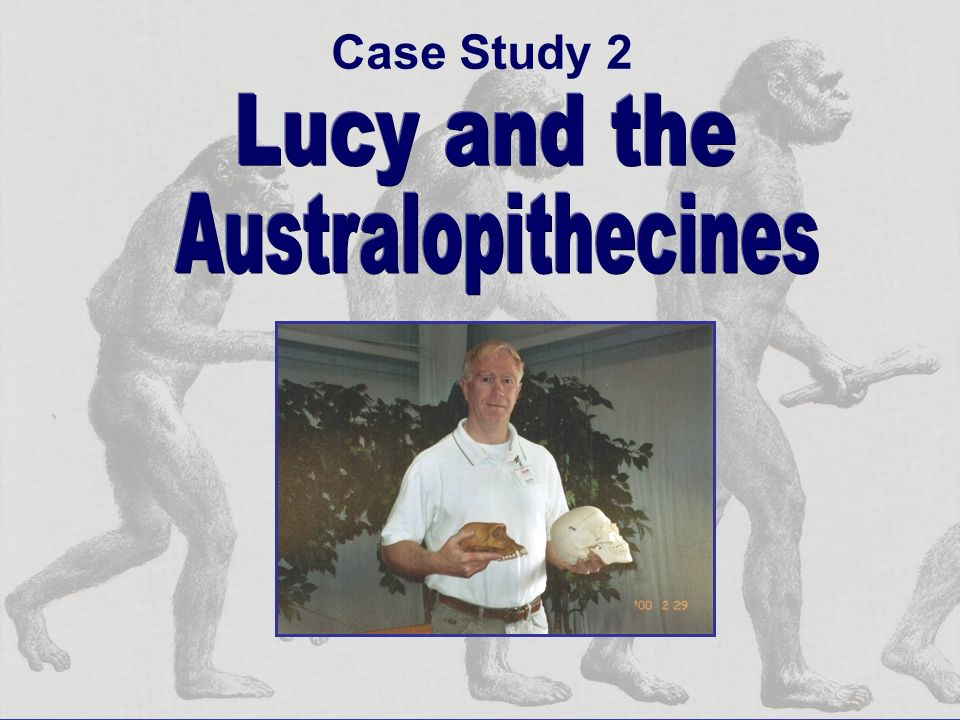 Case Study 2 Australopithecines Lucy and the