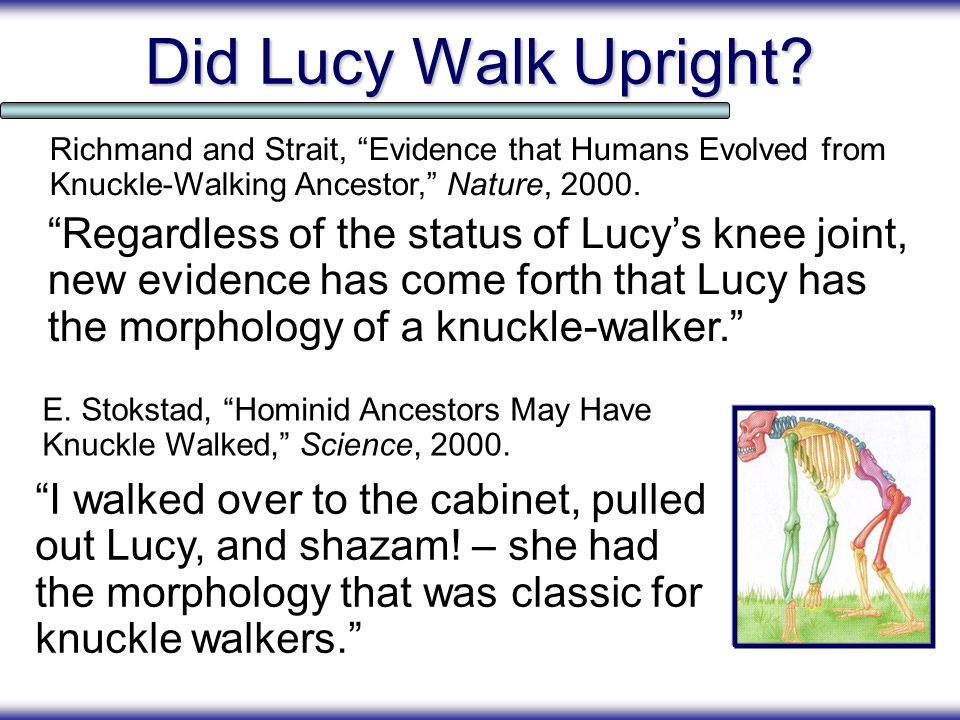Did Lucy Walk Upright Richmand and Strait, Evidence that Humans Evolved from Knuckle-Walking Ancestor, Nature, 2000.