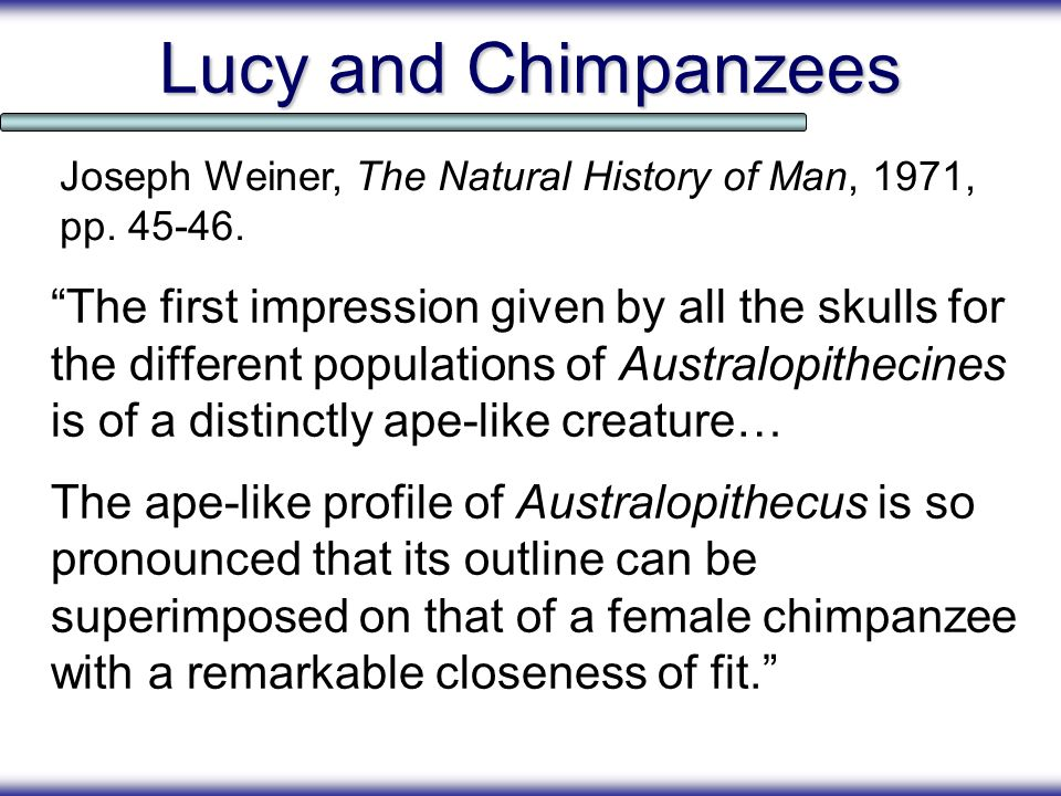 Lucy and Chimpanzees Joseph Weiner, The Natural History of Man, 1971, pp. 45-46.