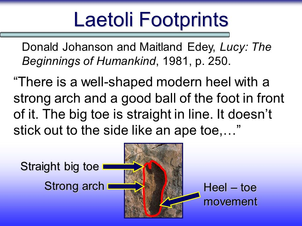 Laetoli Footprints Donald Johanson and Maitland Edey, Lucy: The Beginnings of Humankind, 1981, p. 250.