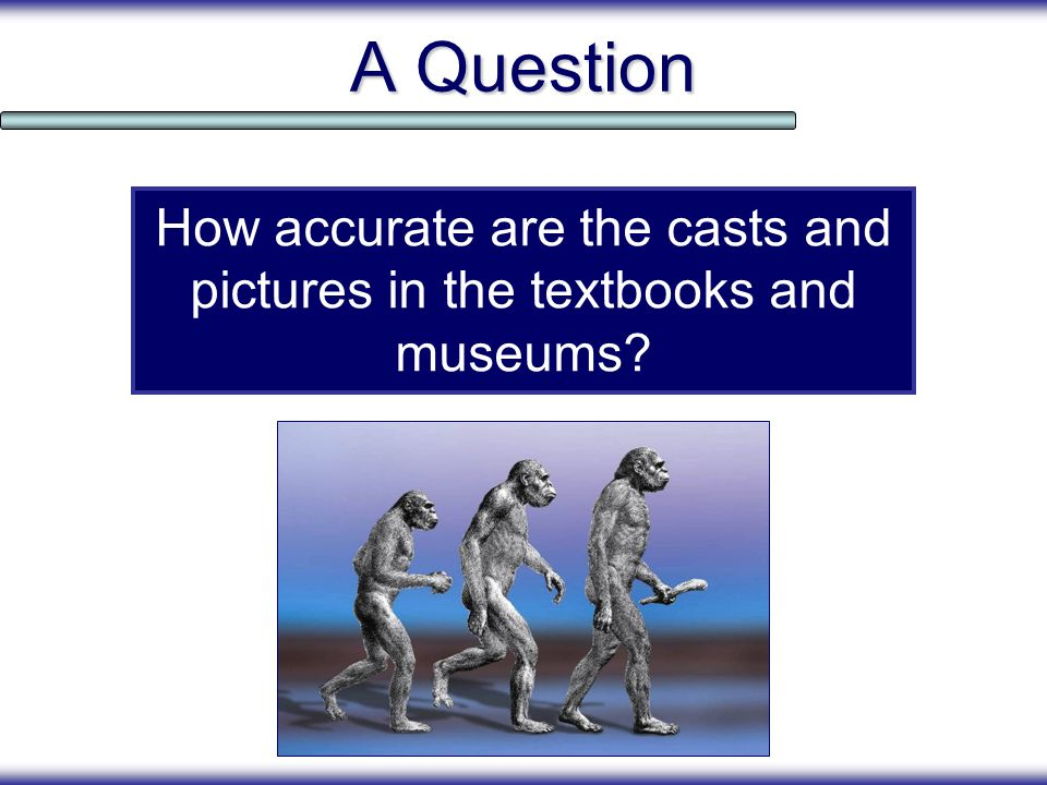 How accurate are the casts and pictures in the textbooks and museums