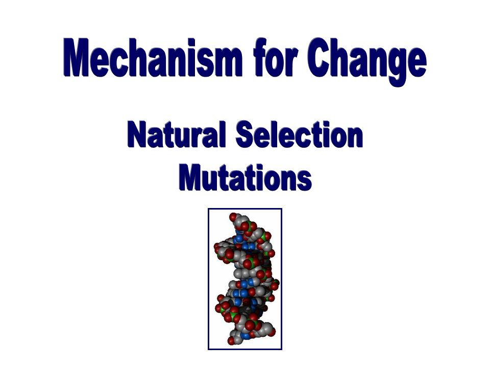 Mechanism for Change Natural Selection Mutations
