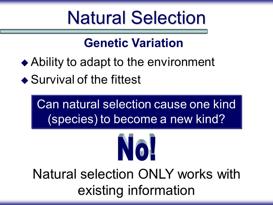 Natural Selection Genetic Variation. Ability to adapt to the environment. Survival of the fittest.