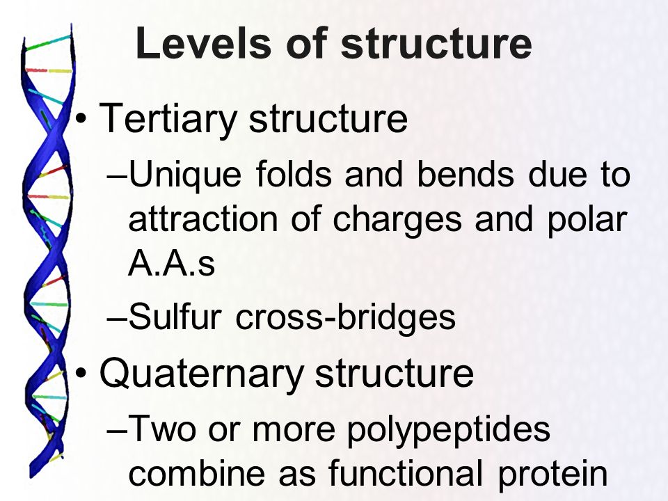Levels of structure Tertiary structure Quaternary structure