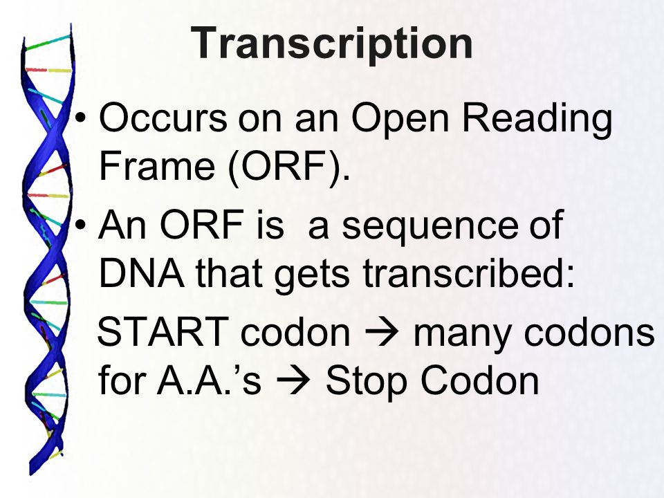 Transcription Occurs on an Open Reading Frame (ORF).