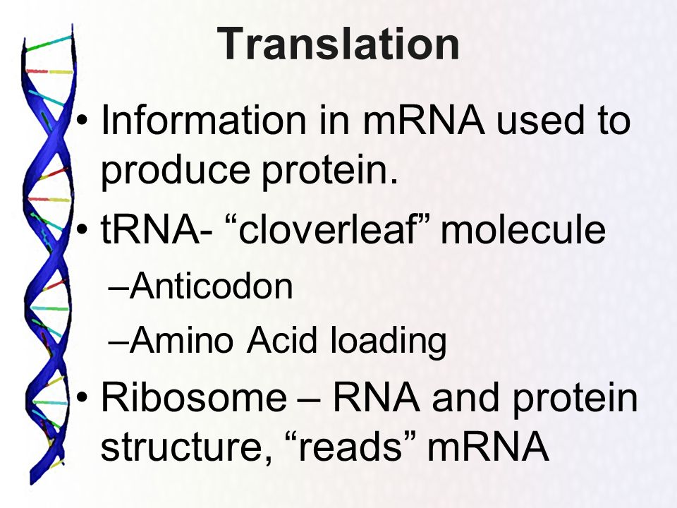 Translation Information in mRNA used to produce protein.