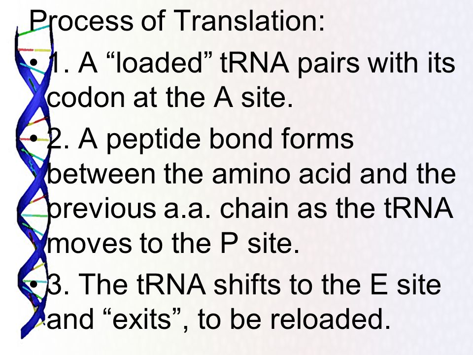 Process of Translation: