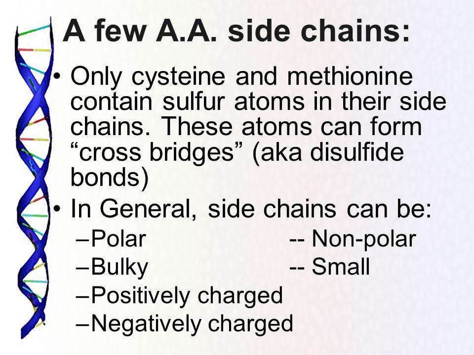 A few A.A. side chains: