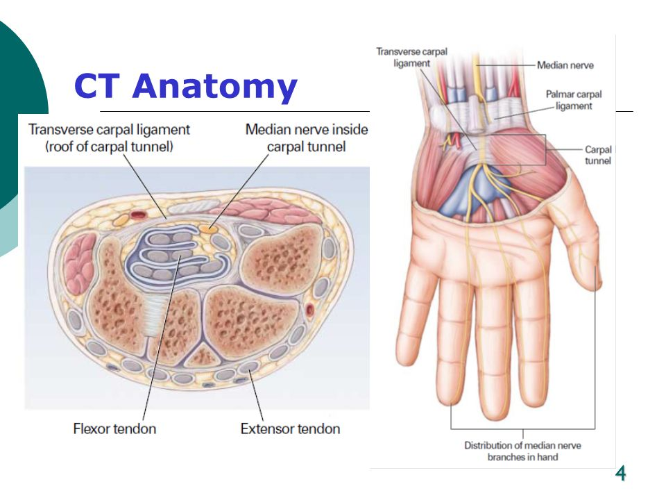 CT Anatomy located at the base of