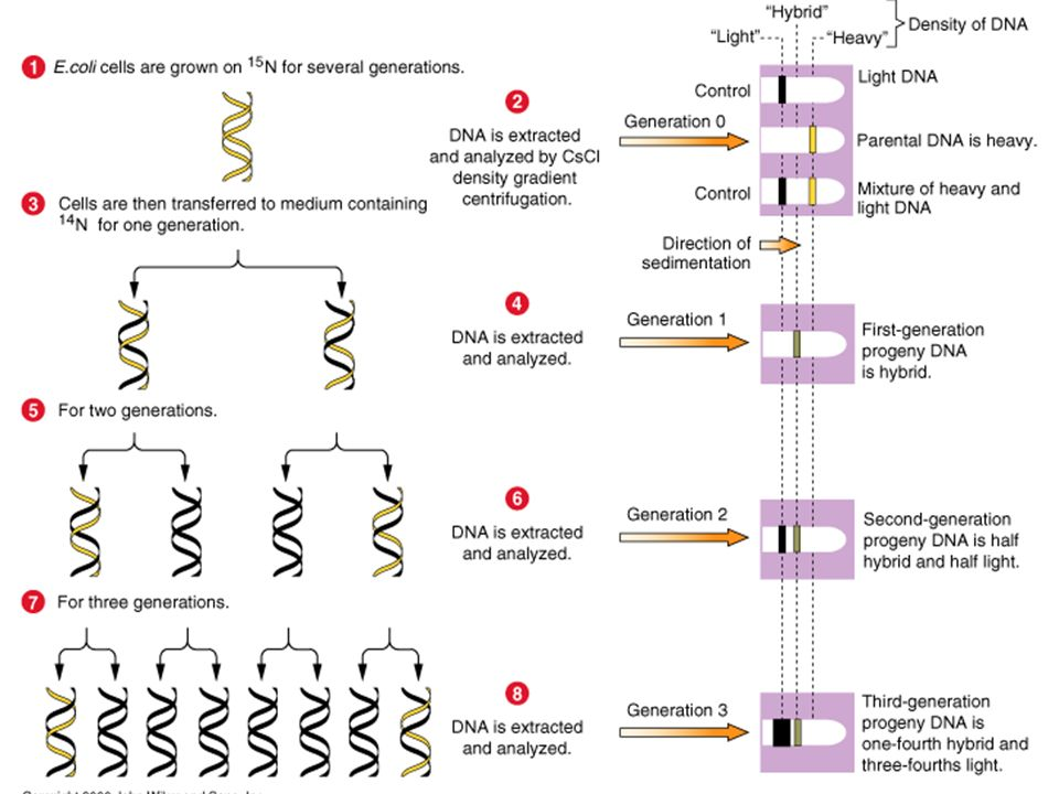 AS Biology. Gnetic control of protein structure and function