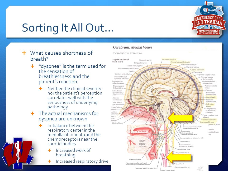 Sorting It All Out… What causes shortness of breath