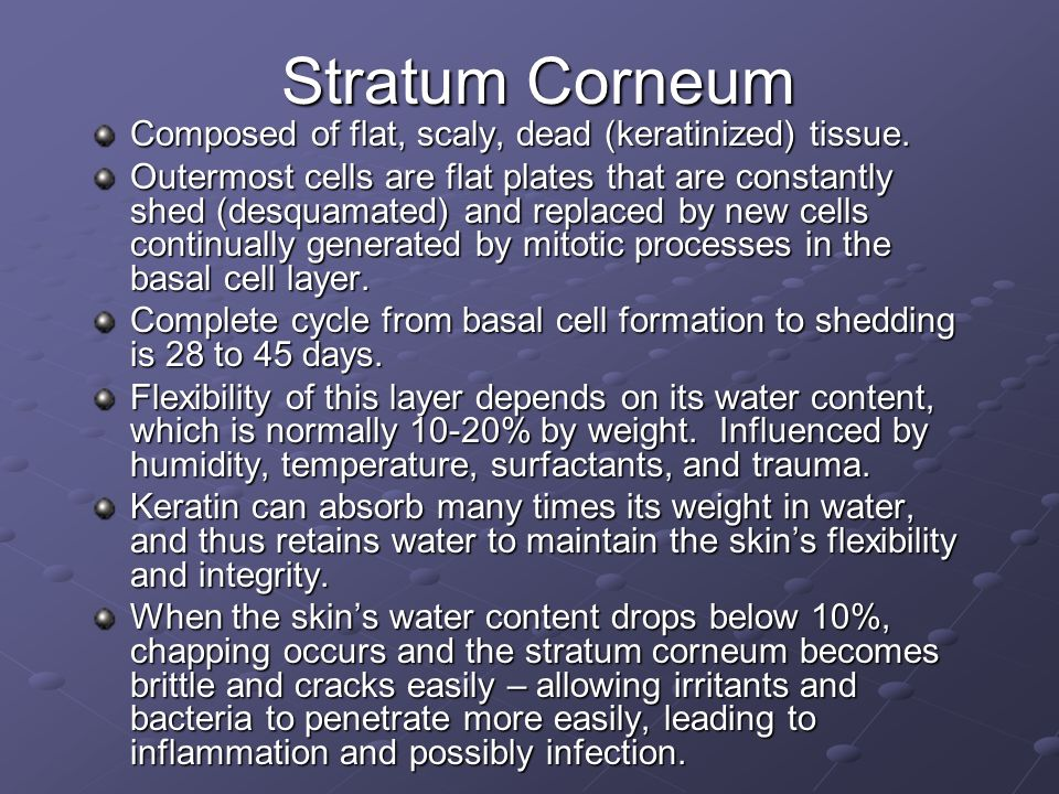 Stratum Corneum Composed of flat, scaly, dead (keratinized) tissue.