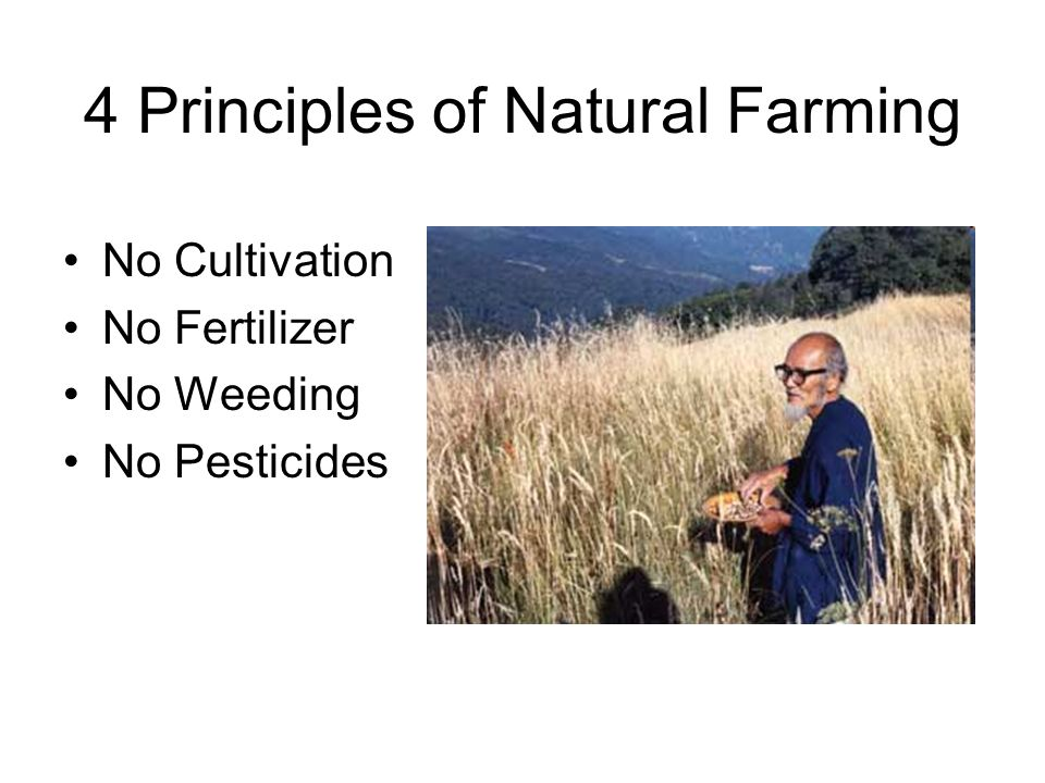 4 Principles of Natural Farming