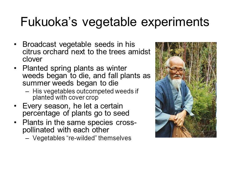 Fukuoka's vegetable experiments
