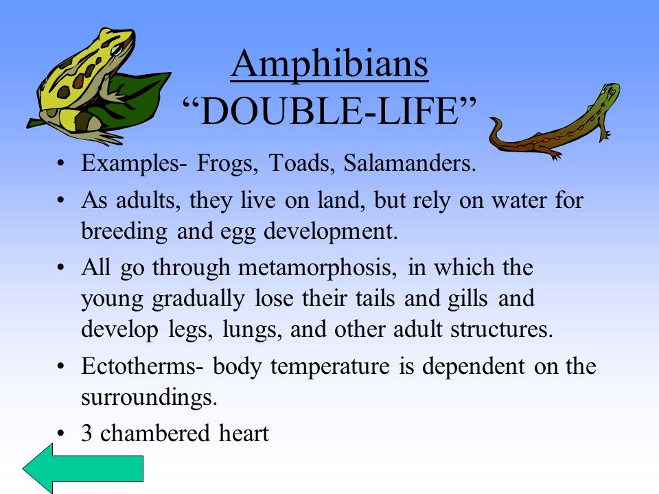 Amphibians DOUBLE-LIFE