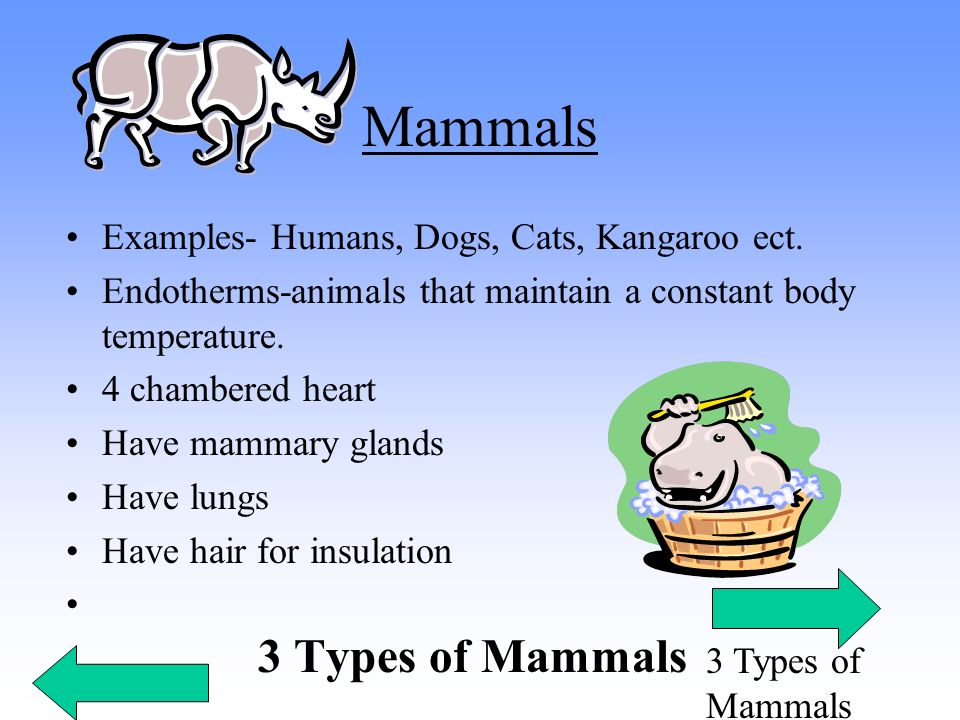 Mammals Examples- Humans, Dogs, Cats, Kangaroo ect.