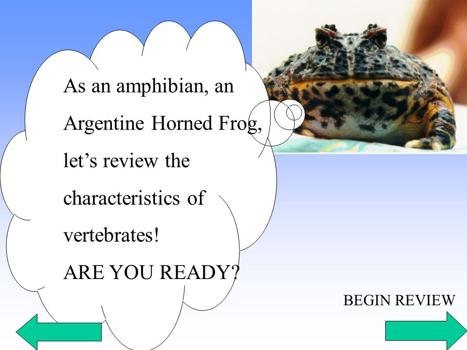 As an amphibian, an Argentine Horned Frog, let's review the