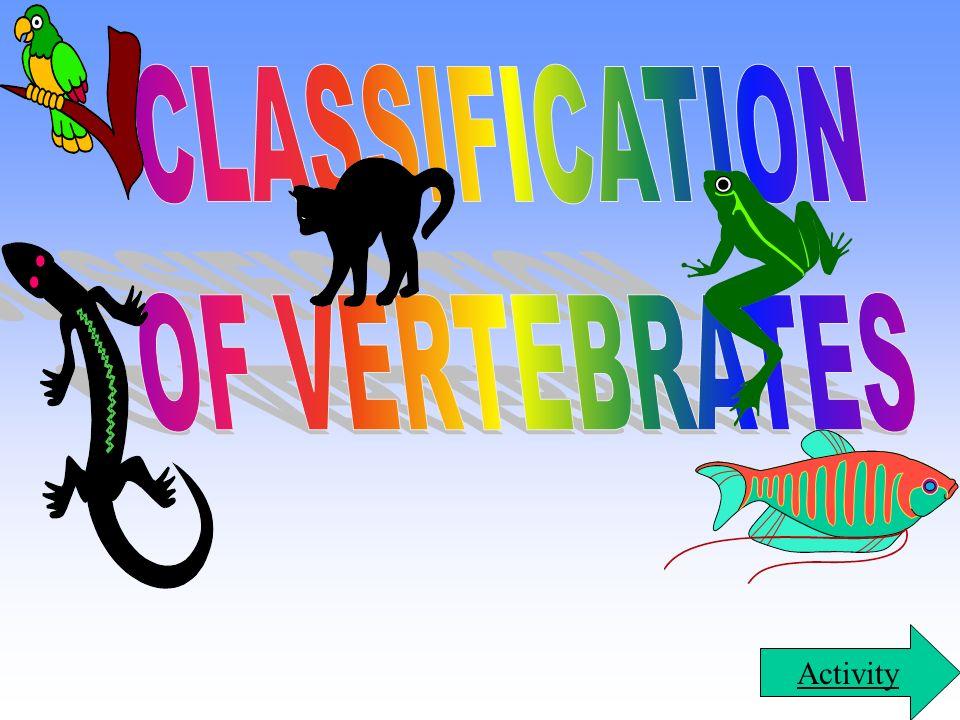 CLASSIFICATION OF VERTEBRATES Activity