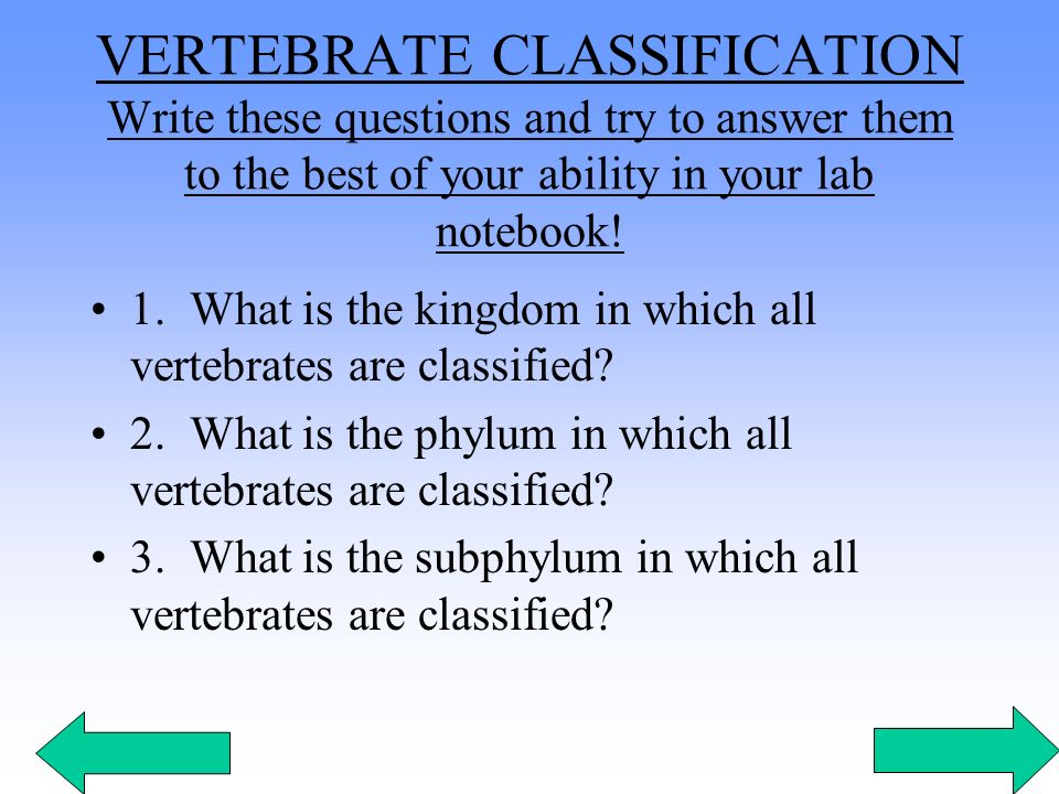 VERTEBRATE CLASSIFICATION Write these questions and try to answer them to the best of your ability in your lab notebook!