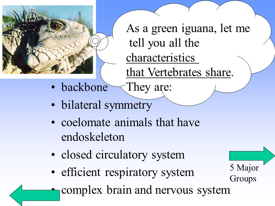 that Vertebrates share. They are: