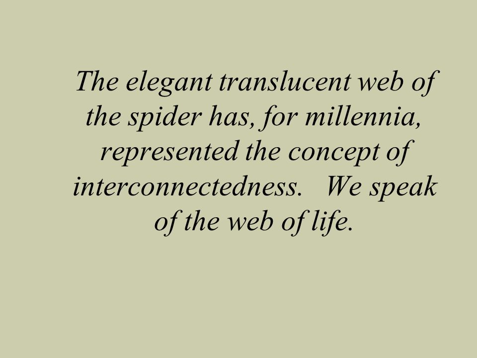 The elegant translucent web of the spider has, for millennia, represented the concept of interconnectedness.