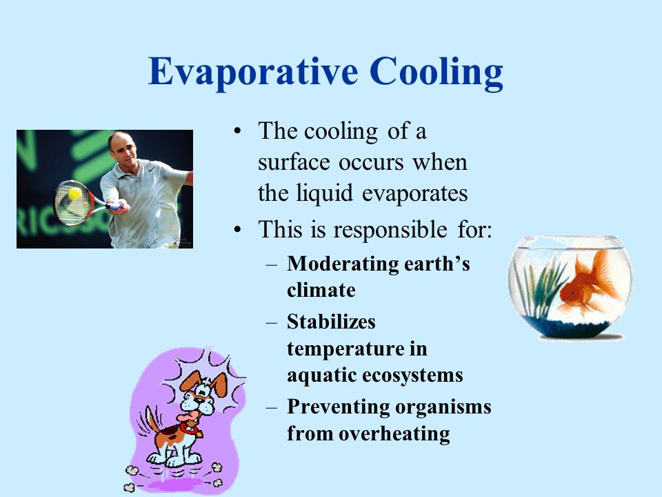 Evaporative Cooling The cooling of a surface occurs when the liquid evaporates. This is responsible for: