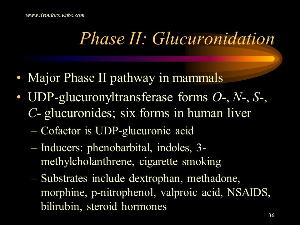 Phase II: Glucuronidation