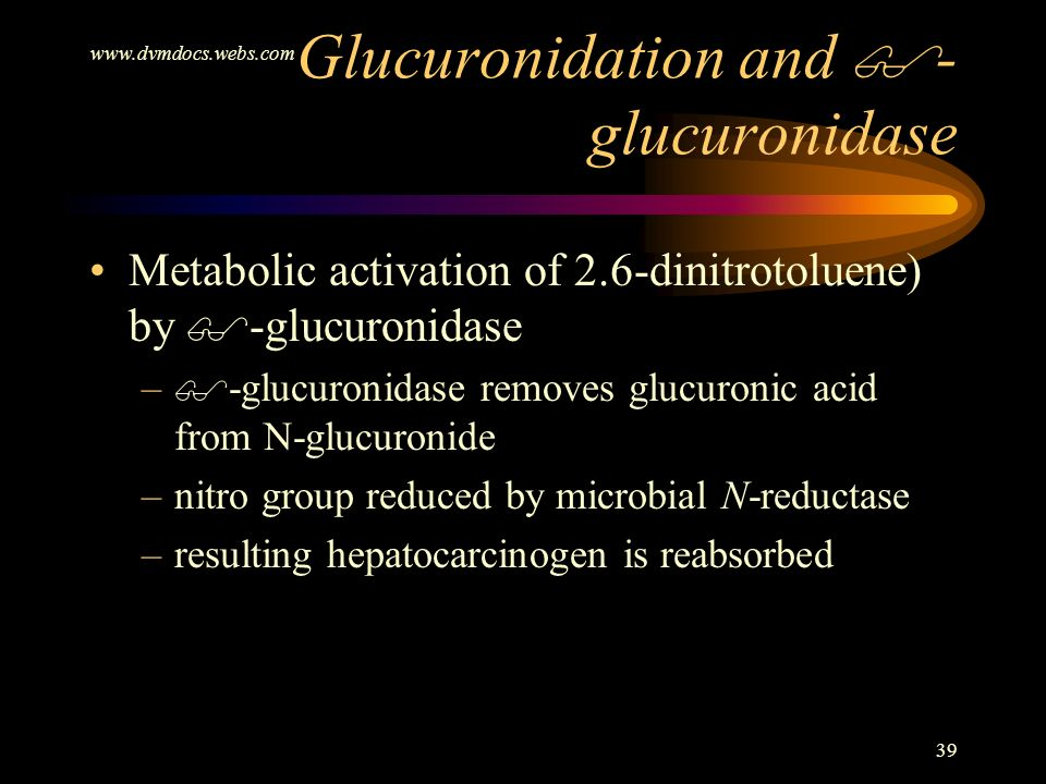 Glucuronidation and -glucuronidase