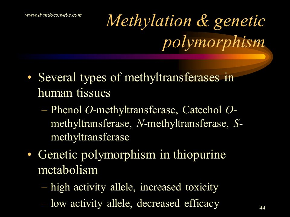 Methylation & genetic polymorphism