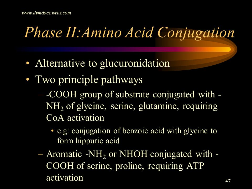 Phase II:Amino Acid Conjugation