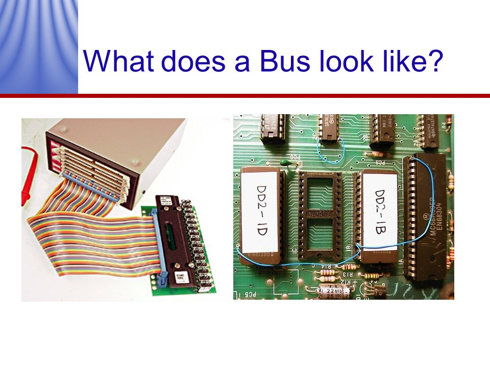 What does a Bus look like