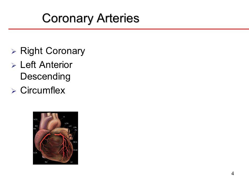 Coronary Arteries Right Coronary Left Anterior Descending Circumflex