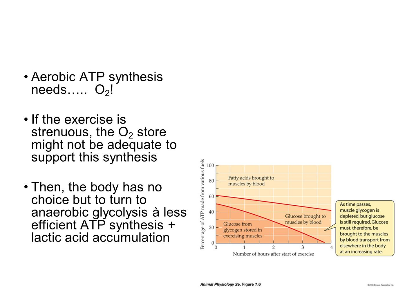 Aerobic ATP synthesis needs….. O2!
