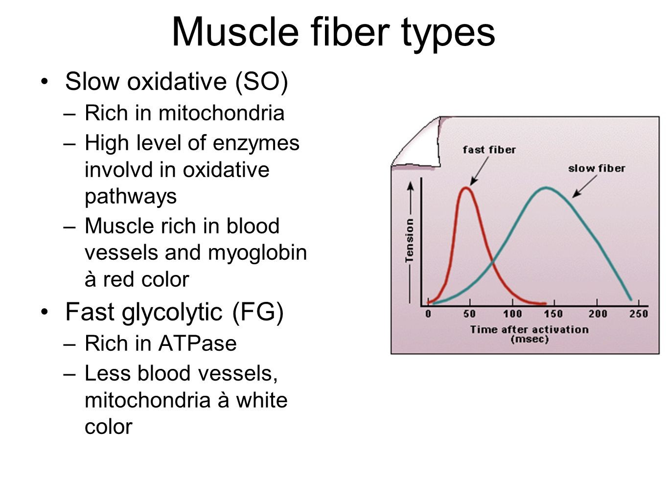 Muscle fiber types Slow oxidative (SO) Fast glycolytic (FG)