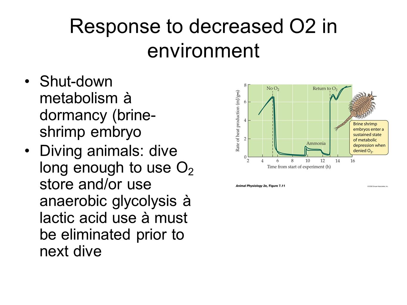 Response to decreased O2 in environment