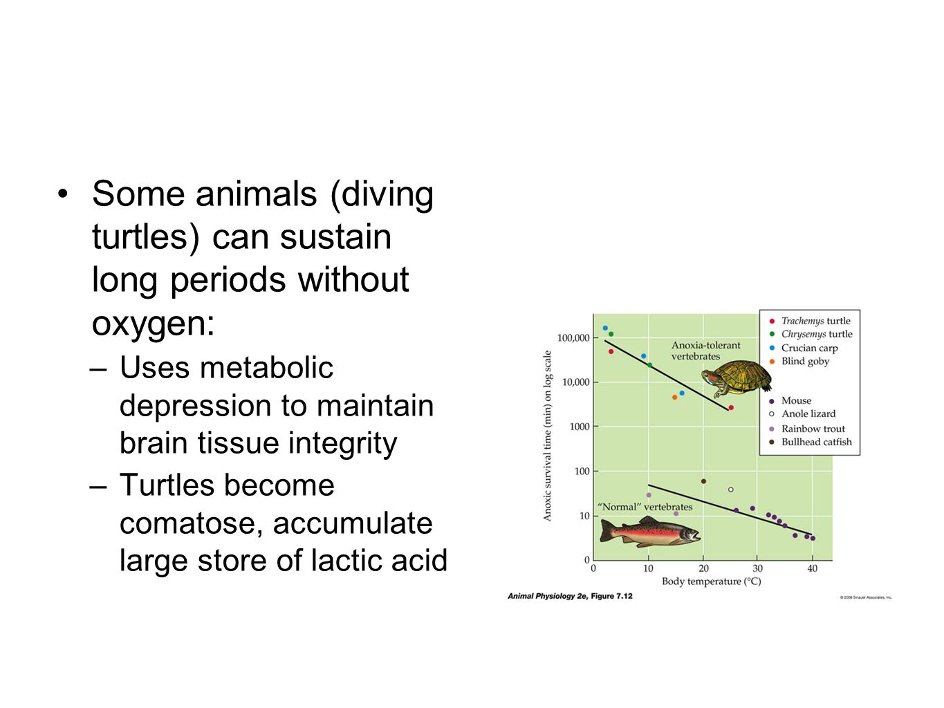 Some animals (diving turtles) can sustain long periods without oxygen: