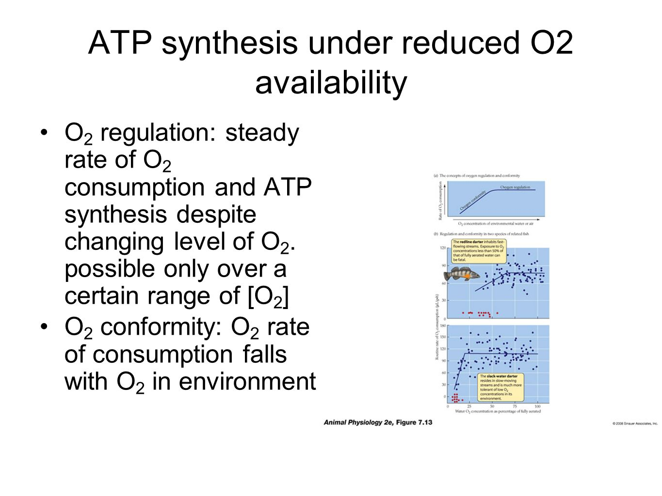 ATP synthesis under reduced O2 availability