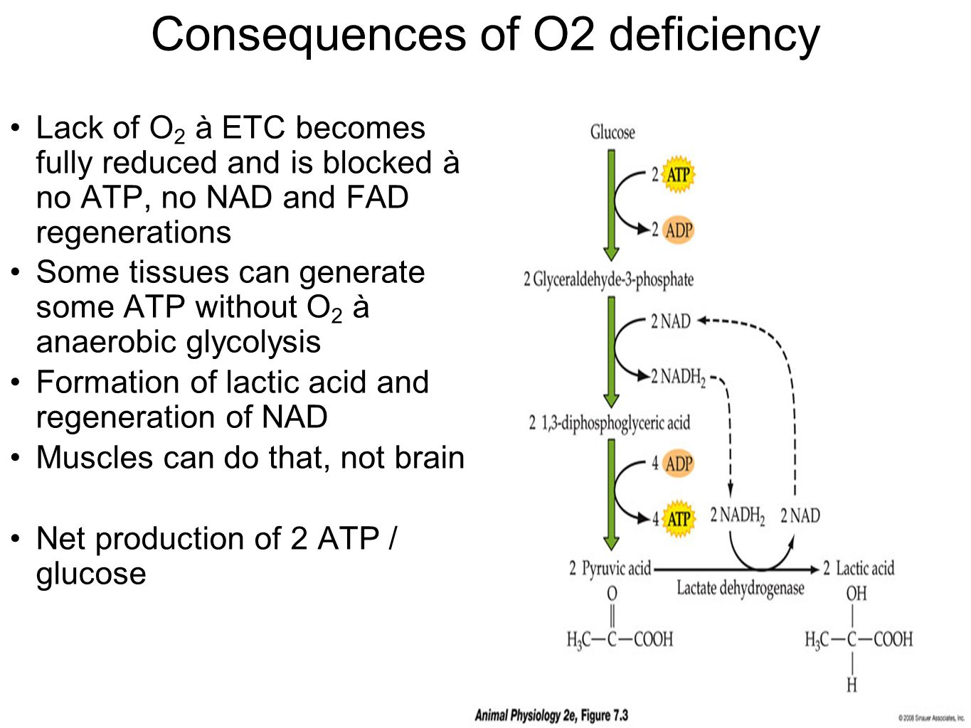 Consequences of O2 deficiency