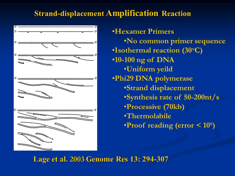 Strand-displacement Amplification Reaction