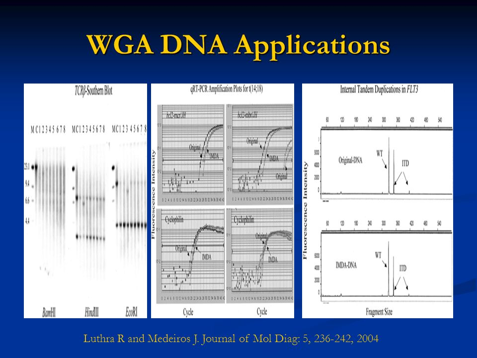 WGA DNA Applications Luthra R and Medeiros J. Journal of Mol Diag: 5, , 2004
