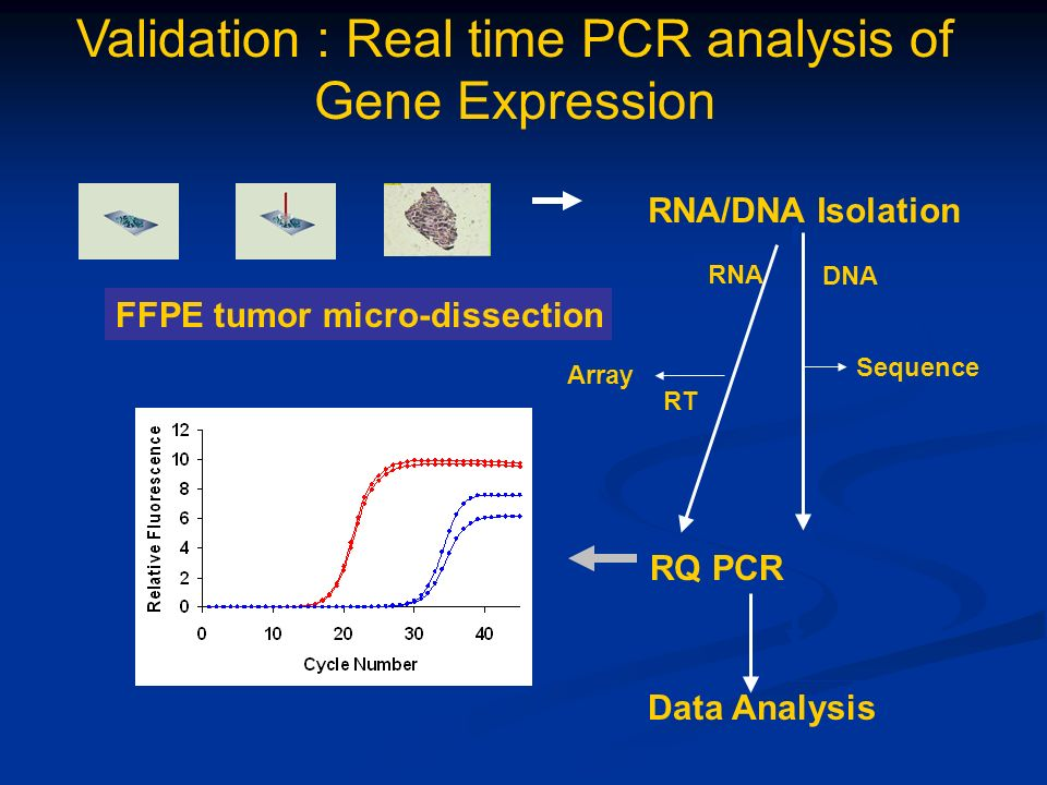 Validation : Real time PCR analysis of Gene Expression