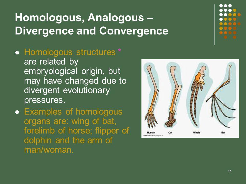 Homologous, Analogous – Divergence and Convergence