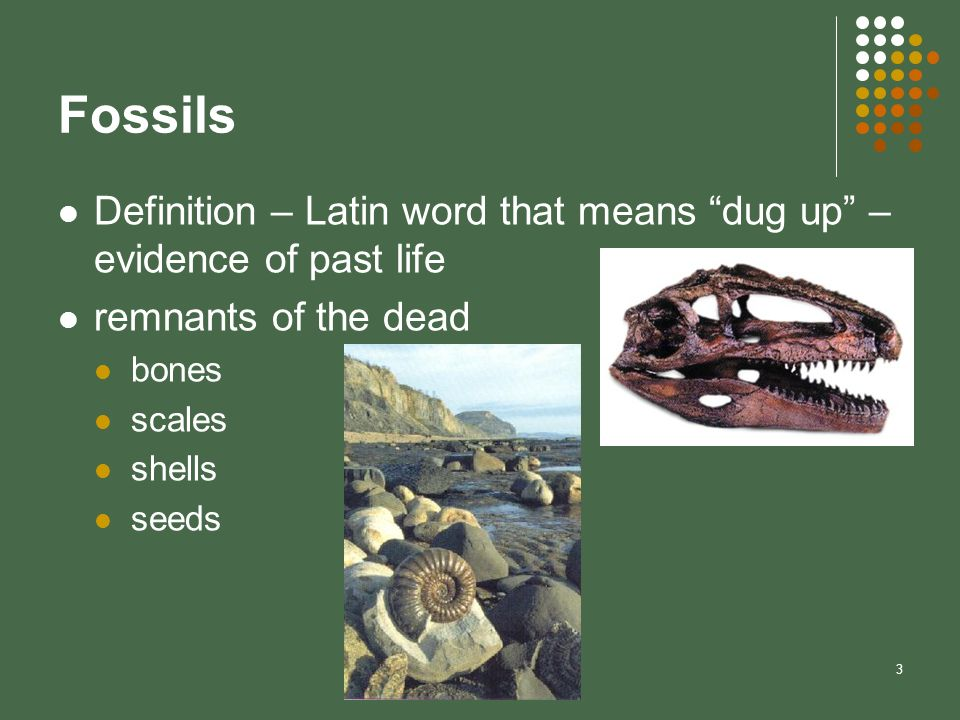 FossilsDefinition – Latin word that means dug up – evidence of past life. remnants of the dead. bones.