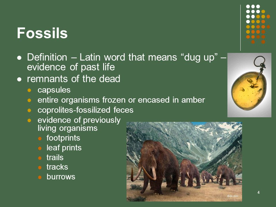 FossilsDefinition – Latin word that means dug up – evidence of past life. remnants of the dead. capsules.