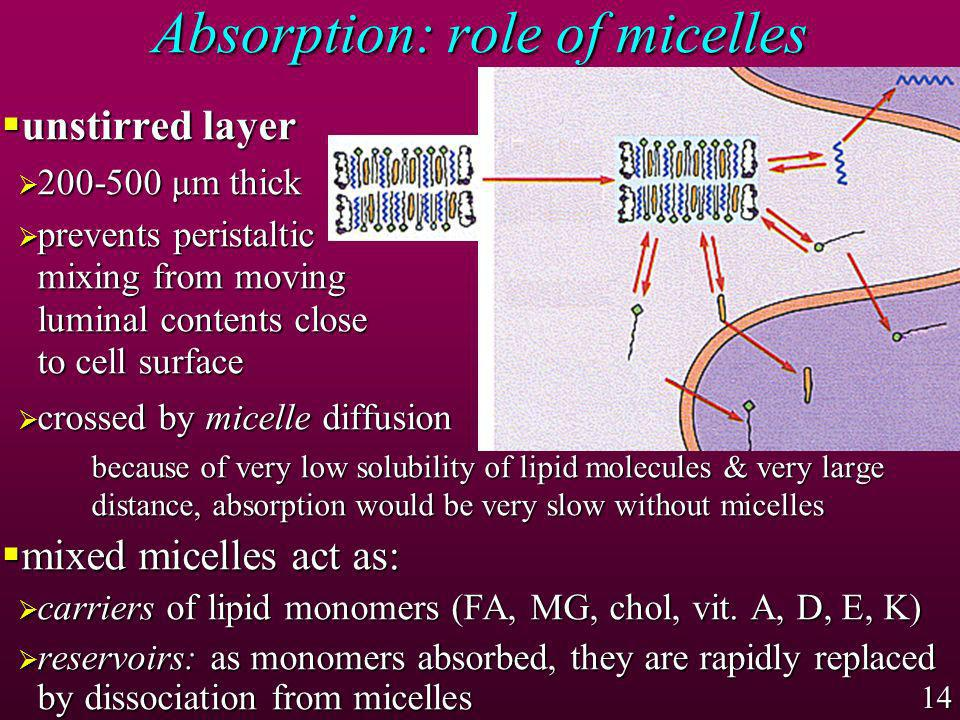 Absorption: role of micelles
