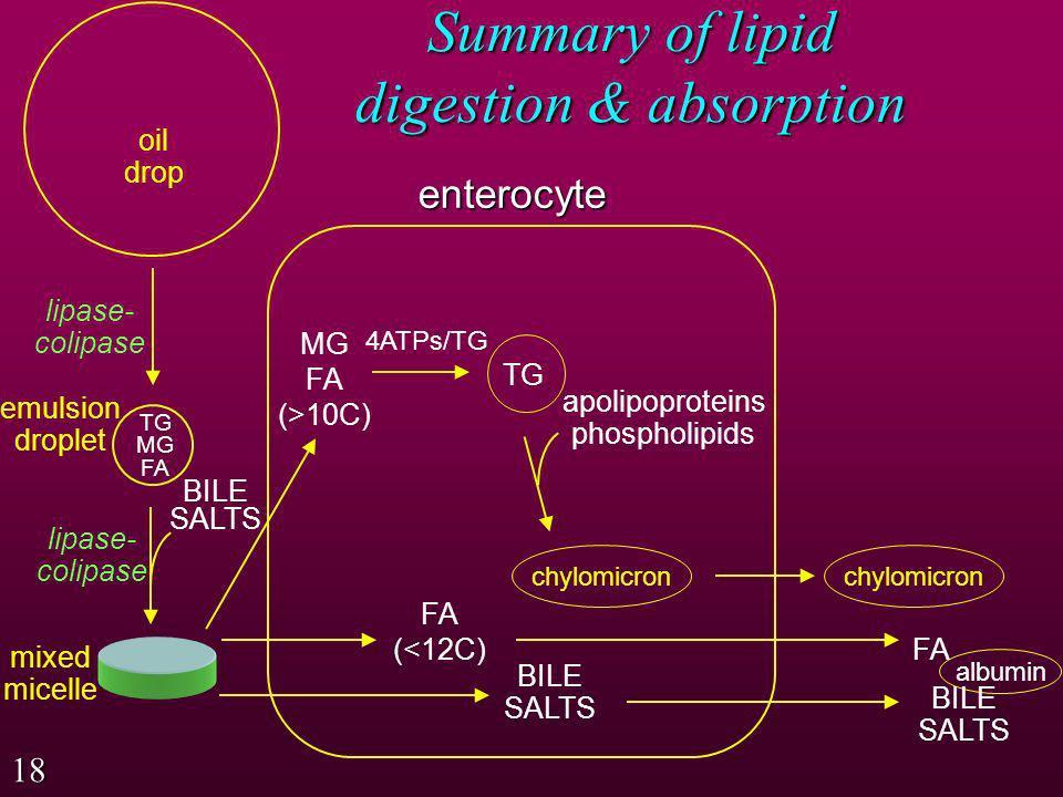 Summary of lipid digestion & absorption