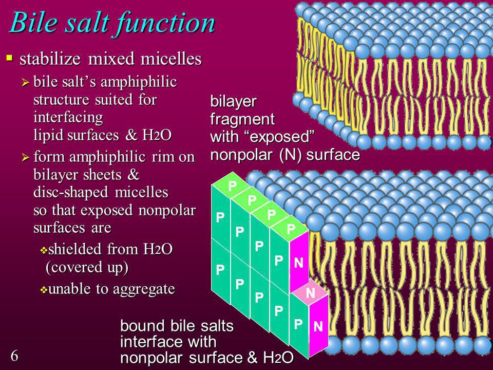 Bile salt function stabilize mixed micelles