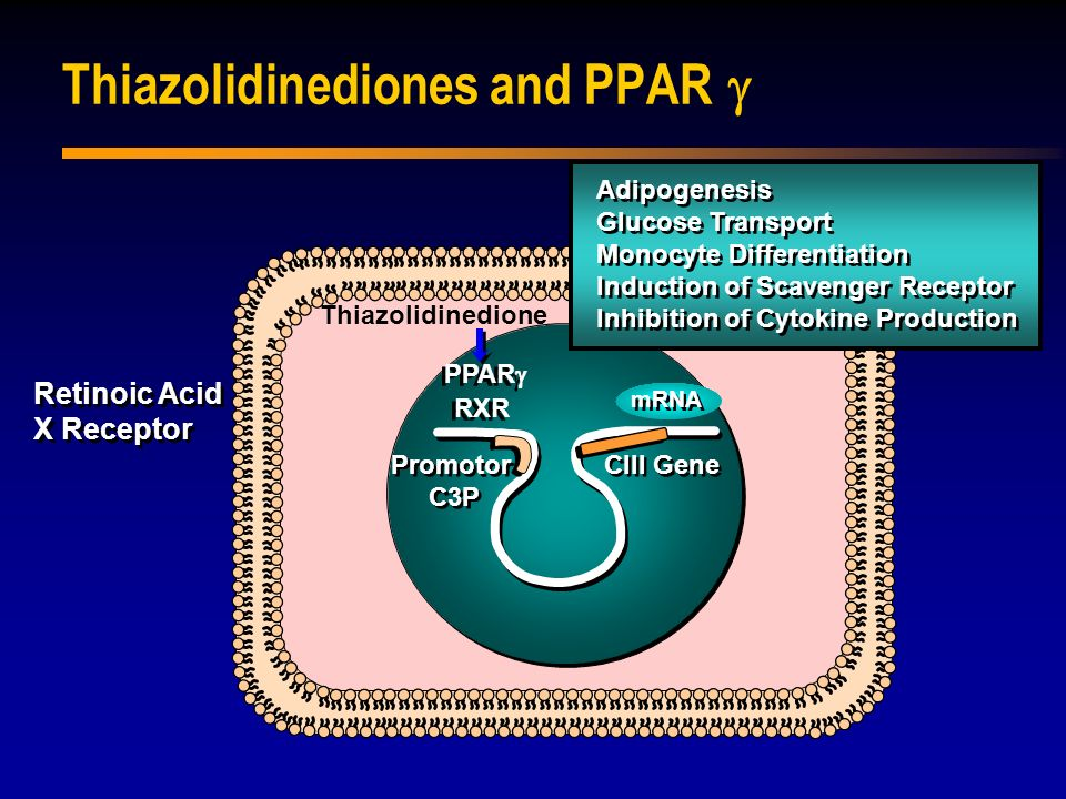 Thiazolidinediones and PPAR g